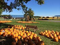 Pumpkin Patch Corn Maze Hay Ride