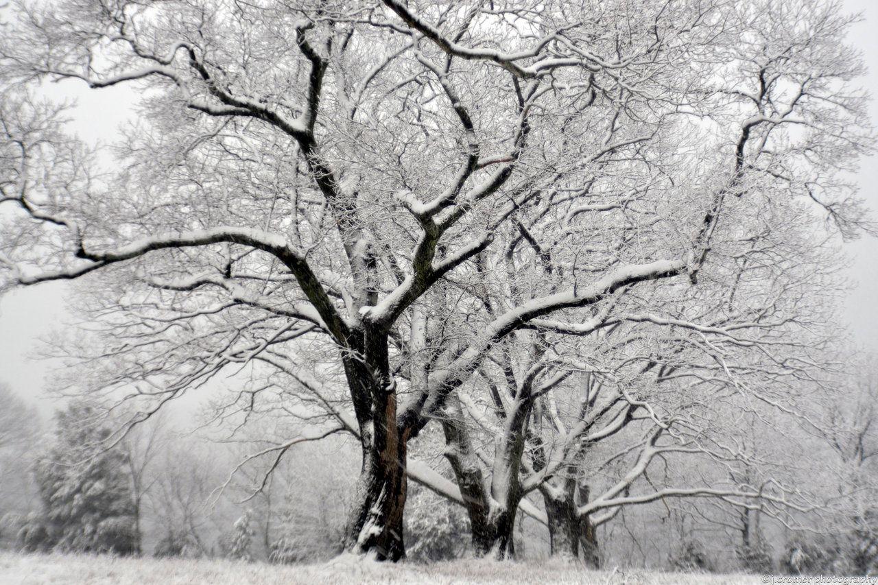 five snowed trees