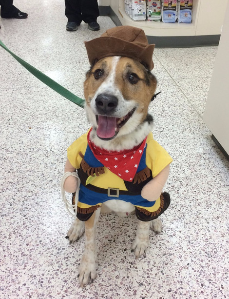 last year the big trend was either the front facing costumes like dewey here as sheriff or star wars costumes