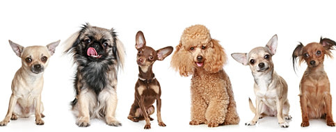 How many types of dogs are there?