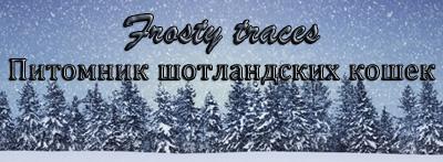 Питомник Frosty Traces - шотландские котята, коты и кошки, купить котенка, продажа котят Санкт-Петербург