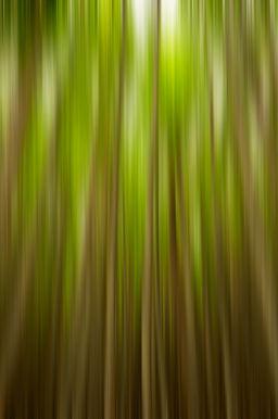 Vertigo-Forest.jpg