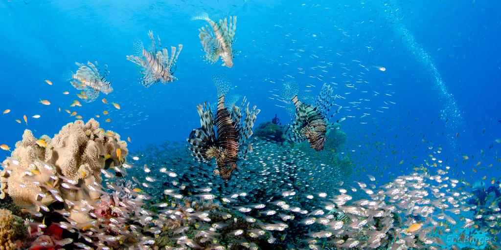 Считается, что родина дайвинга - это филиппинские острова, и за острыми ощущениями нужно ехать именно туда или