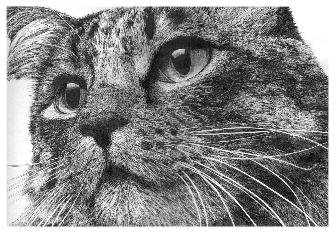 Gato - Hachura
