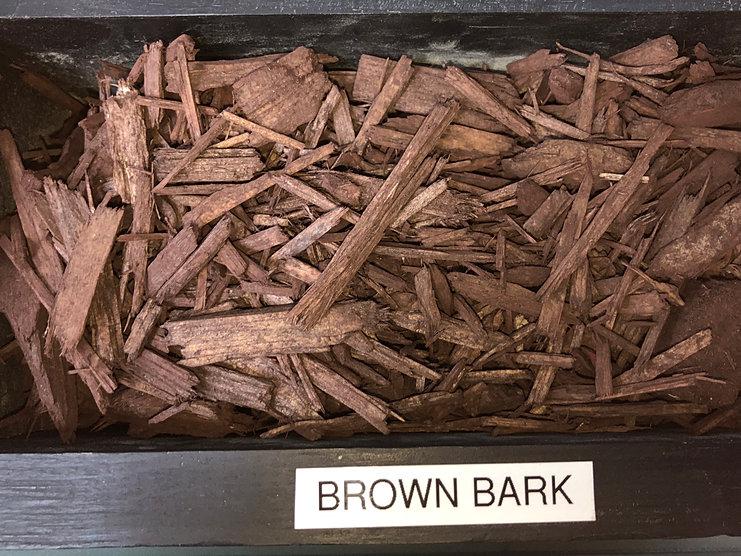 bdw.brownbark.3.9.2018