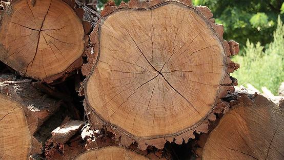 slide_akat_drevo.jpg