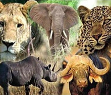 Hunting in Africa | Africa Hunting | Cape Buffalo Hunting Packages | Big 5 african hunting safaris | Africa Hunting | Cape Buffalo Hunting Packages | African Lion Hunt | African Plains Game Hunt | Dangerous Game Hunting | Big 5 African Hunt