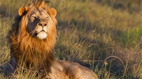 Hunting in Africa.jpg
