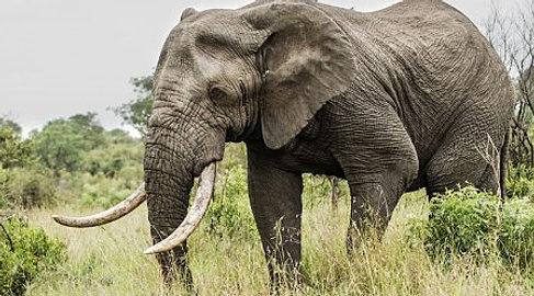 African Hunting.jpg