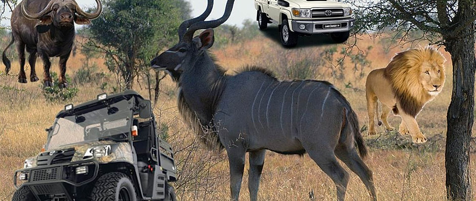 hunting in Africa, Hunting in South Africa, Africa Hunting, Big 5 african hunting safaris, south africa hunting, cape buffalo hunting packages, african lion hunt, african plains game hunt, big 5 african hunt, hunting safaris in south africa, south african
