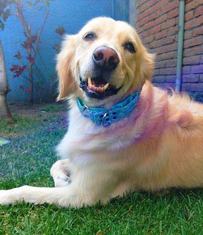 Perros Gu A Para Ciegos Consentidos