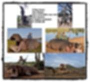 Hippo Crock website.jpg