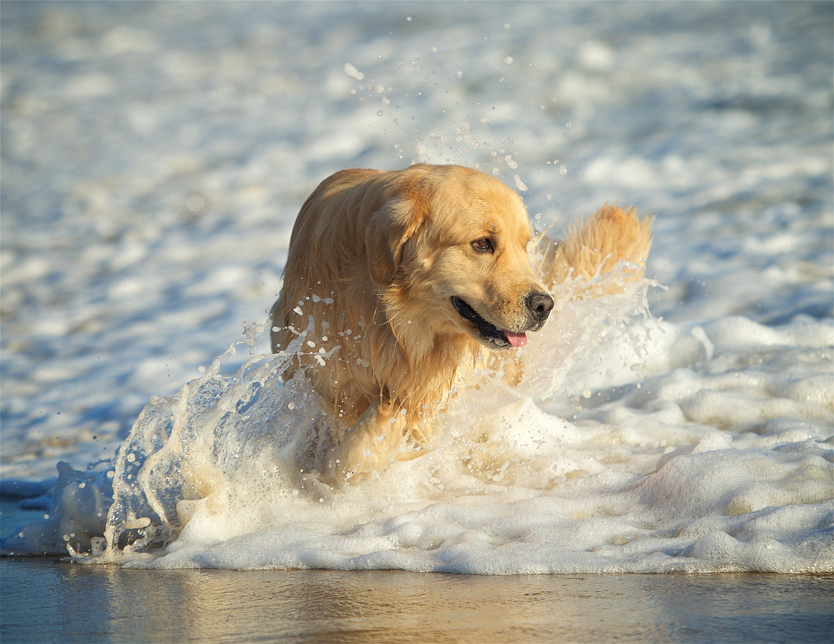 Αποτέλεσμα εικόνας για dog in beach