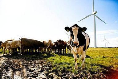 cow-and-wind-turbine.jpg