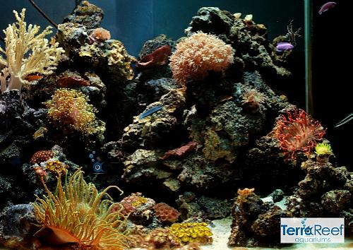 Aquarium Maintenance Service Design Installs De P