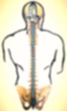 craniosacral therapy cork fabrizio vitali