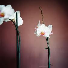 welkom bij thai orchidee massage classic thai massage relax massage mening. Black Bedroom Furniture Sets. Home Design Ideas
