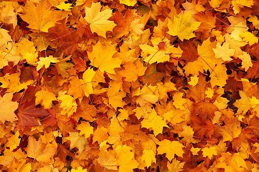 Foto Herbst.jpg