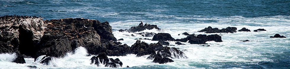 bodega bay singles over 50 Hopefully this will be the least travel day for the bay area and we can slip point reyes station oysters bodega bay east bay singles over 50 99 km.