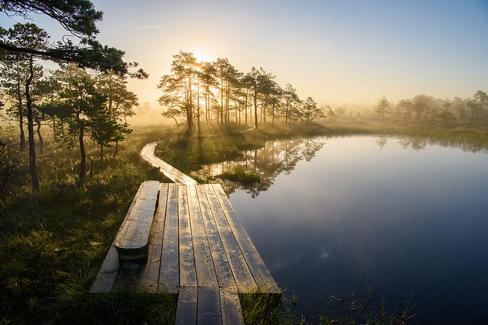 597_Morning Bog_Sven Zacek.jpg