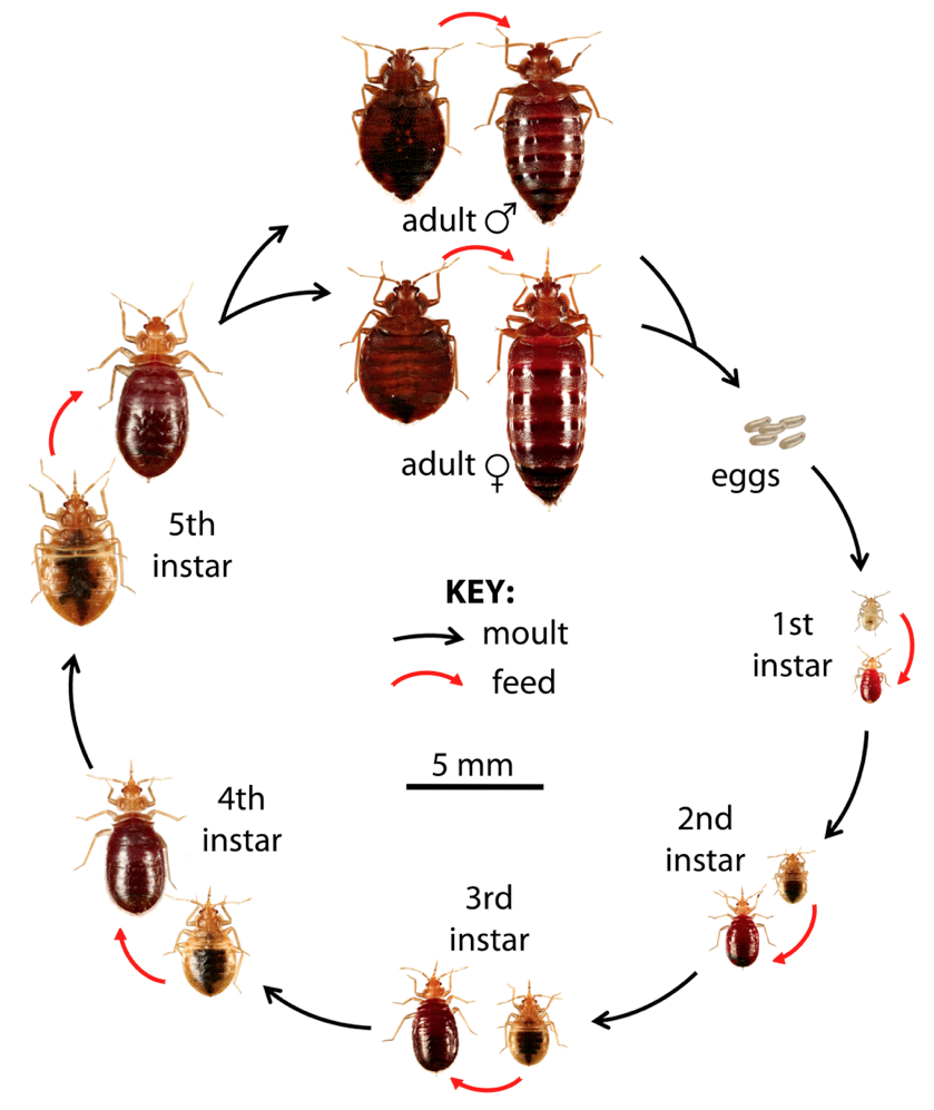 Bed Bug Treatments - 1 Year Warranty and 100% Success | Bed Bug ...