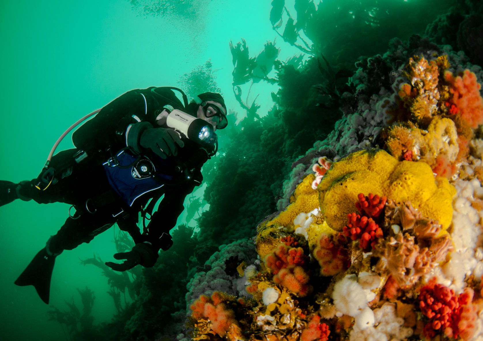 Nanaimo gateway to island diving scuba h2o adventure magazine xflitez Images