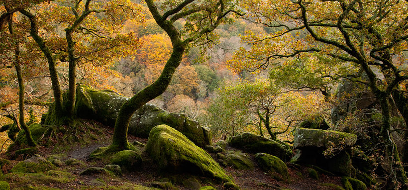 Image result for dartmoor autumn