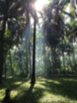BTF_Forest.jpg