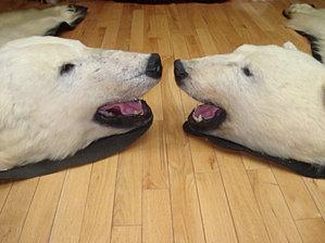 """Résultat de recherche d'images pour """"peau d'ours"""""""