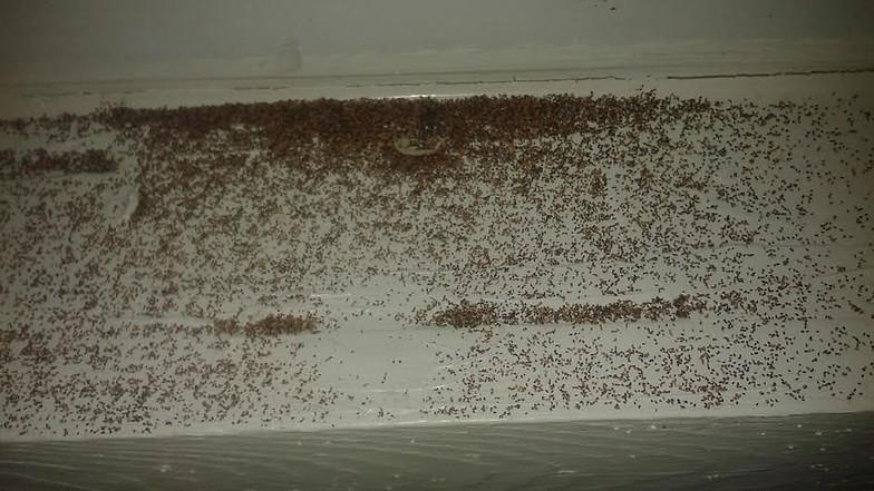 Do Termites Leave Sawdust ~ Drywood termites termite frass photos