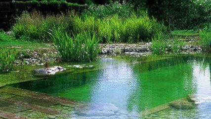 piscine-biologique.jpg