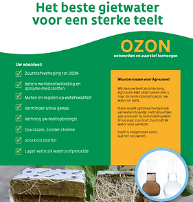 Ozon flyer preview.PNG