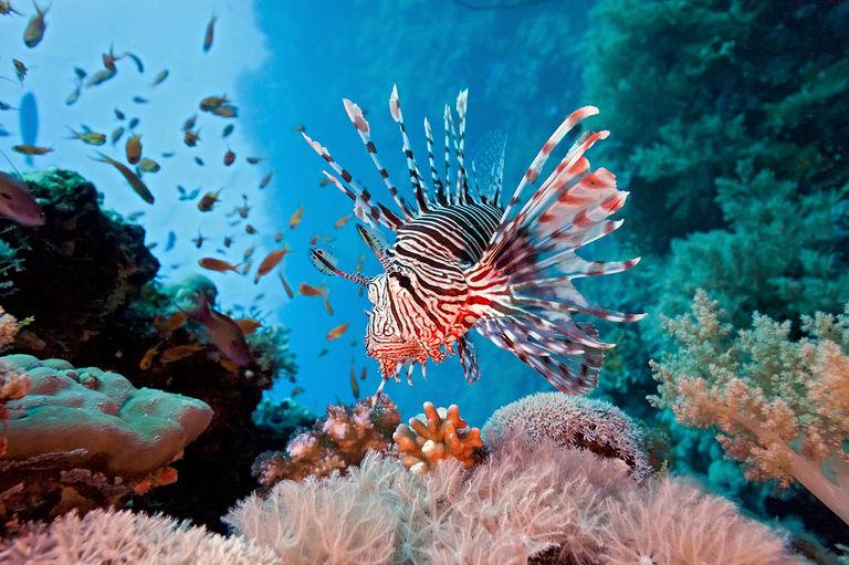 Coral Reef - Lessons - Tes Teach