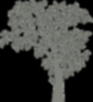 baylogo_master_tree.png
