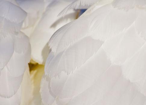 shop-kuscheln-schenken, die fünf Sprachen der Liebe