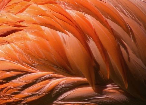 KuschelRaum buchen mieten orange federn