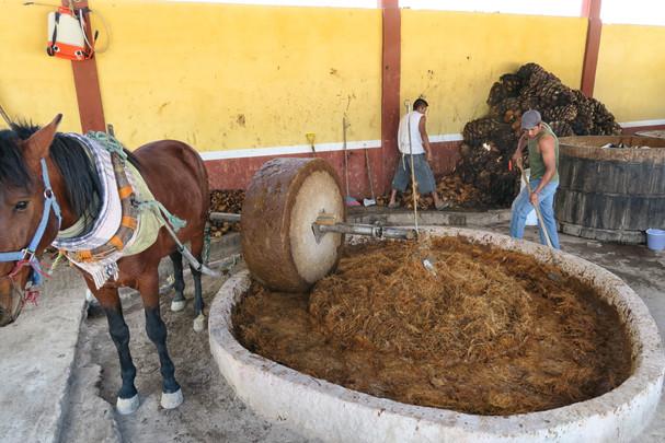 Image result for mezcaleria domingo oaxaca horse