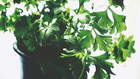 aromatic-green-growth-1746410.jpg