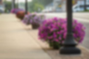 7-05-18 Stratton's flowers on Main St, B