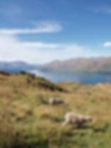 Views on Roy's Peak, New Zealand