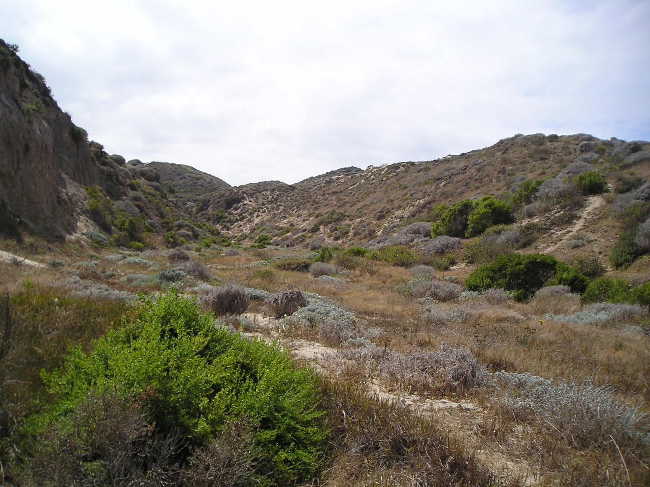 Chaparral Biome on emaze