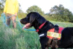 DogSchool (1 of 1)-940.jpg