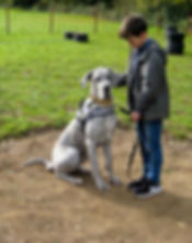 DogSchool (1 of 1)-38.jpg