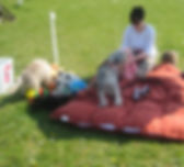 DogSchool (1 of 1)-20.jpg