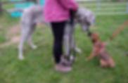 DogSchool (1 of 1)-35.jpg