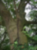 Tree Surgeons in Warwickshire, Tree Safe Ltd
