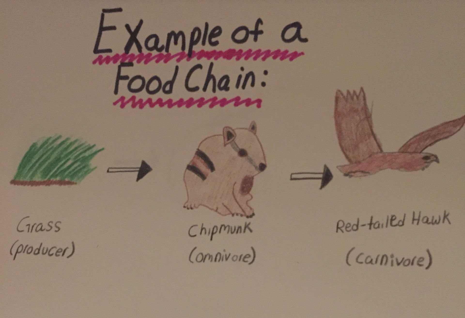 Food Chains Ecologynewstoday