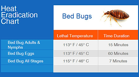 What Temp Kills Bed Bugs And Eggs