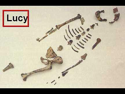 Radio carbon dating dinosaur bones wow 5