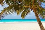 PT Logo Palm tree beach-beach-landscape-